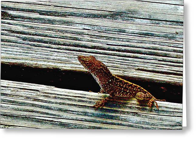 Pond In Park Greeting Cards - Little Lizard near Eco Pond in Everglades National Park-Florida Greeting Card by Ruth Hager