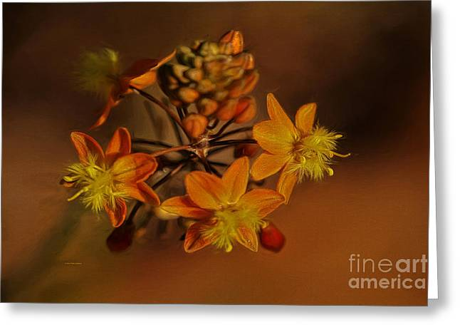 Dragon Flies Photographs Greeting Cards - Little Orange Flowers Greeting Card by Deborah Benoit