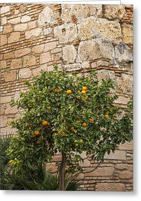 Stonewall Photographs Greeting Cards - Little Orangetree Greeting Card by Lutz Baar