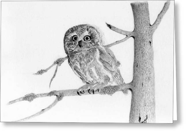 Saw Drawings Greeting Cards - Little Owl Greeting Card by Wendy Brunell