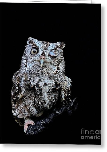Owl Photographs Greeting Cards - Little Owl Winks Eye in Darkness Greeting Card by Wayne Nielsen