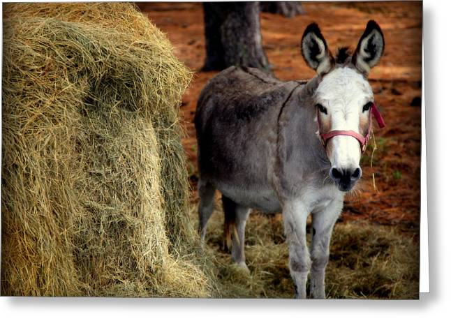 Baby Donkey Greeting Cards - Little Pedro Greeting Card by Karen Wiles