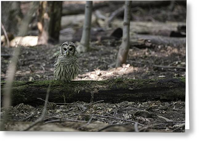 Barred Owl Greeting Cards - Little People of the Forest Greeting Card by Everet Regal