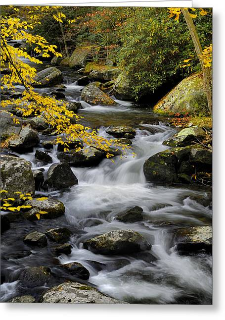 Pigeon In Park Greeting Cards - Little Pigeon River at Tremont in Great Smoky Mountains Greeting Card by Darrell Young