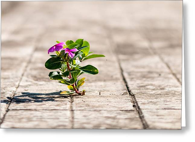 Little Boy Lost Greeting Cards - Little plant Greeting Card by Salvatore Pappalardo