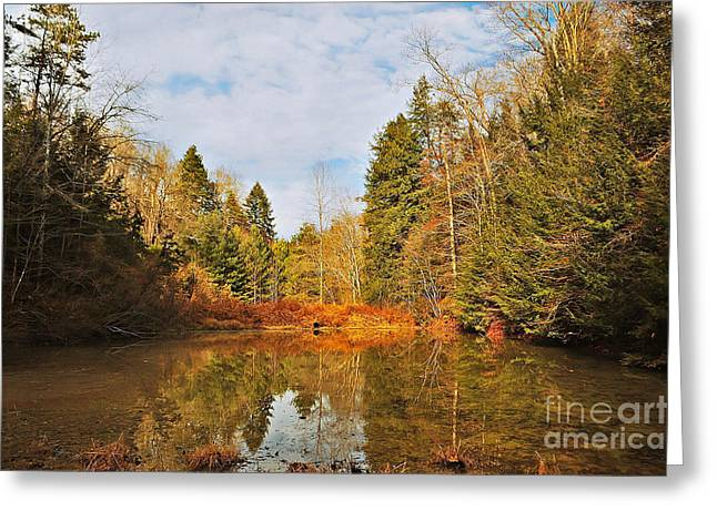 Drain Greeting Cards - Little Pond Greeting Card by Lena Auxier