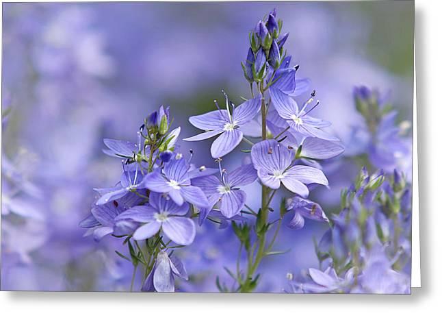 Soft Purple Greeting Cards - Little Purple Flowers Horizontal Greeting Card by Gill Billington
