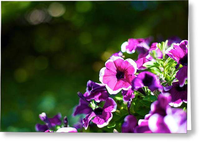 Jeremy Greeting Cards - Little Purple Flowers Greeting Card by JM Photography