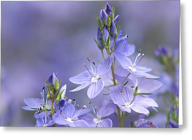Soft Purple Greeting Cards - Little Purple Flowers - Square Greeting Card by Gill Billington