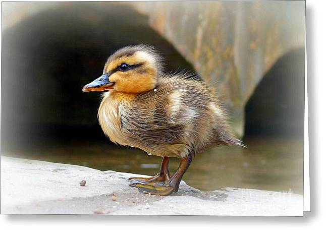 Ducklings Mixed Media Greeting Cards - Little Quack Greeting Card by Morag Bates