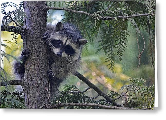 Raccoon Digital Art Greeting Cards - Little Raccoon Greeting Card by Maria Angelica Maira