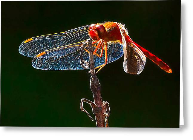 Abeautifulsky Greeting Cards - Little Red Dragon 1 Greeting Card by Bill Caldwell -        ABeautifulSky Photography
