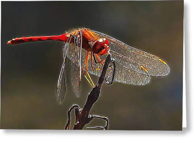 Meadowhawk Greeting Cards - Little Red Dragon 2 Greeting Card by Bill Caldwell -        ABeautifulSky Photography