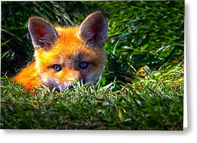 New Baby Art Greeting Cards - Little Red Fox Greeting Card by Bob Orsillo