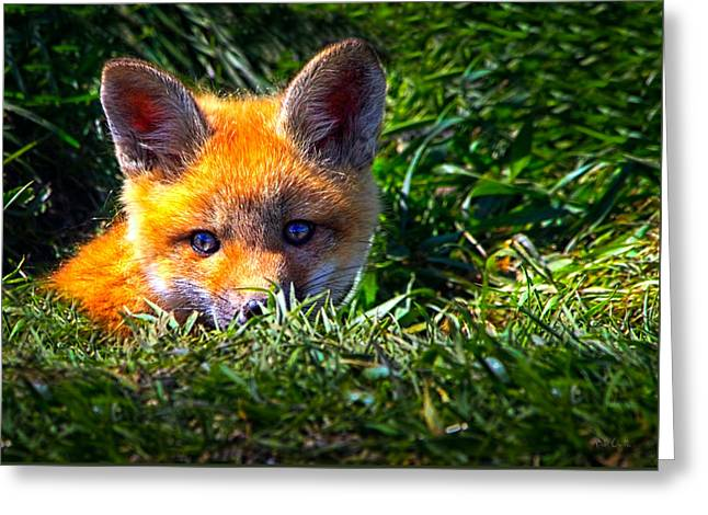 Uplifted Greeting Cards - Little Red Fox Greeting Card by Bob Orsillo