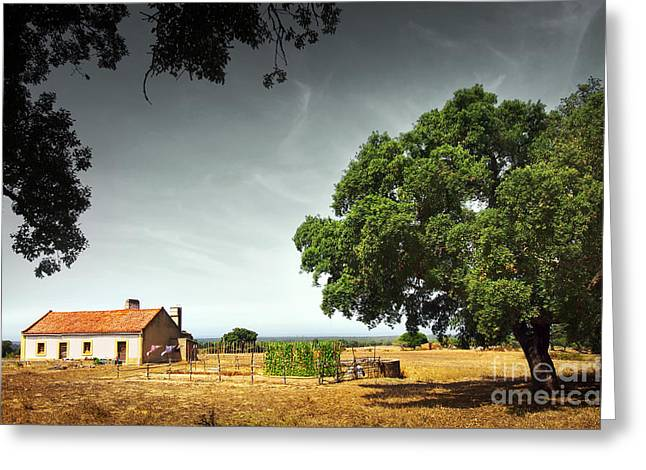 Sheds Greeting Cards - Little Rural House Greeting Card by Carlos Caetano