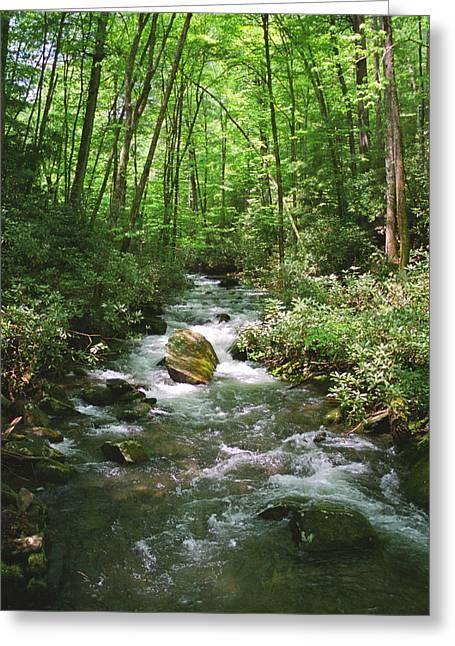 Slickrock Greeting Cards - Little Santeetlah Creek Greeting Card by Orange Cat Art