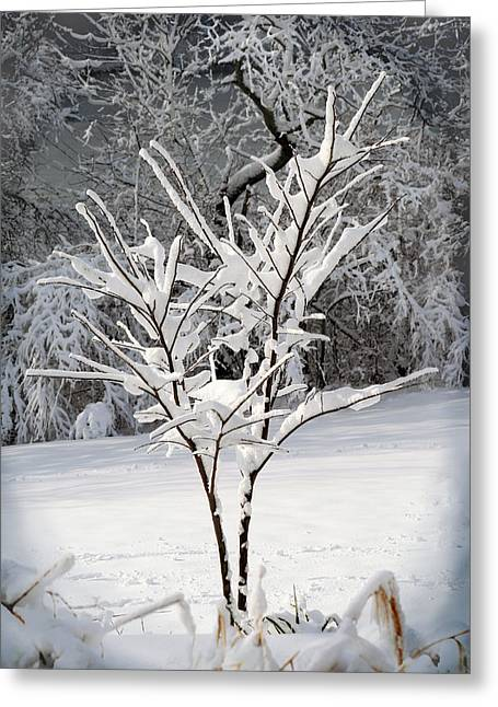 Snow-covered Landscape Greeting Cards - Little Snow Tree Greeting Card by Karen Adams