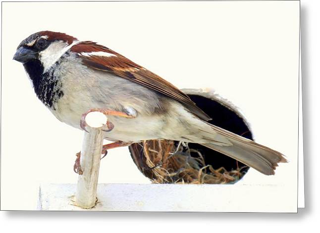 Sparrow Greeting Cards - Little Sparrow Greeting Card by Karen Wiles