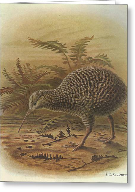 Little Birds Greeting Cards - Little Spotted Kiwi Greeting Card by J G Keulemans