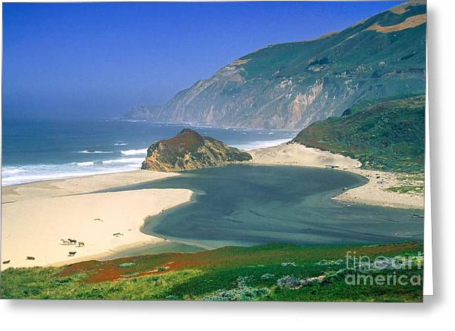 Big Sur Greeting Cards - Little Sur River in Big Sur Greeting Card by Charlene Mitchell