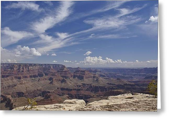 Looking At The Past Greeting Cards - Little Tree...Grand Canyon Greeting Card by Brian Kamprath