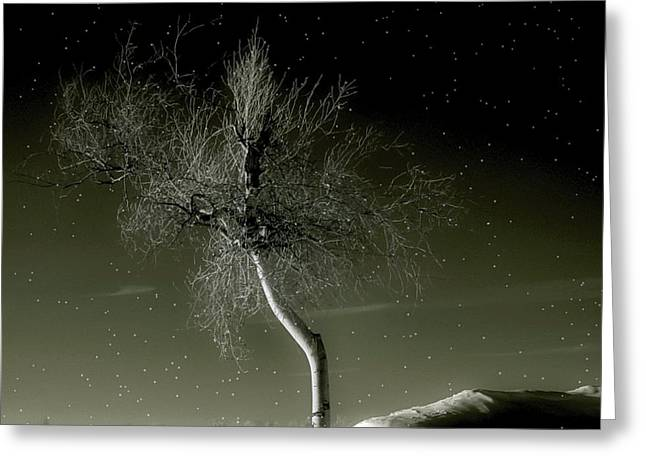 Small Trees Greeting Cards - Little Tree Greeting Card by Gothicolors Donna Snyder