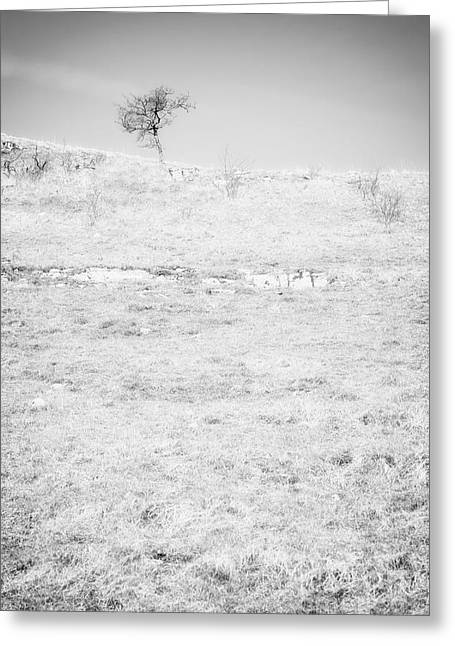 Nature Study Digital Greeting Cards - Little Tree on the Hill - Black and White Greeting Card by Natalie Kinnear