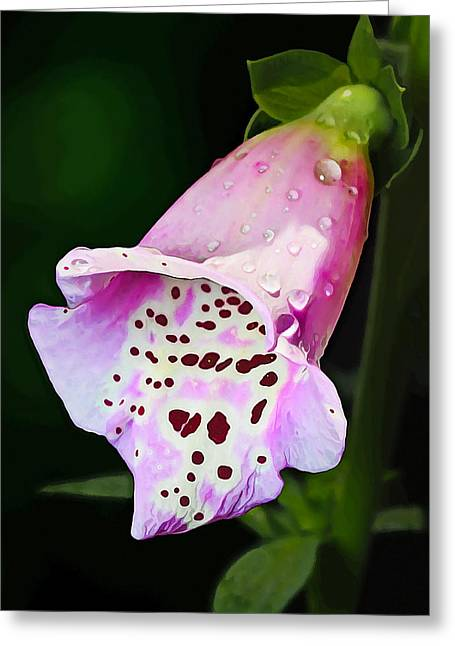 Featured Art Greeting Cards - Little Trumpet Greeting Card by Bill Caldwell -        ABeautifulSky Photography
