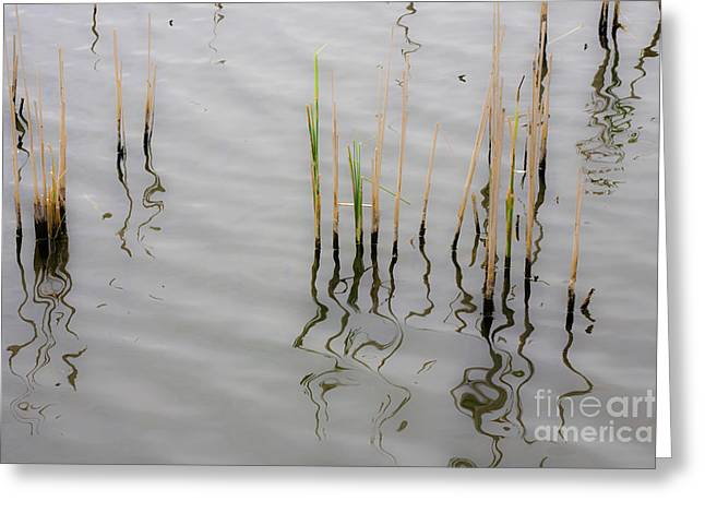 Peaceful Scene Greeting Cards - Little Waves Greeting Card by Heiko Koehrer-Wagner