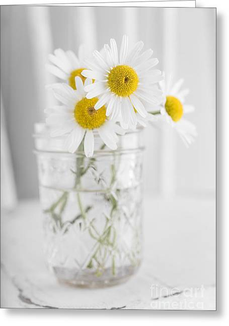 Chairs Greeting Cards - Little white daisy flowers over white Greeting Card by Edward Fielding