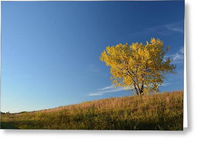 Within A Tree Greeting Cards - Live in the Prairie Greeting Card by Jesse Olson
