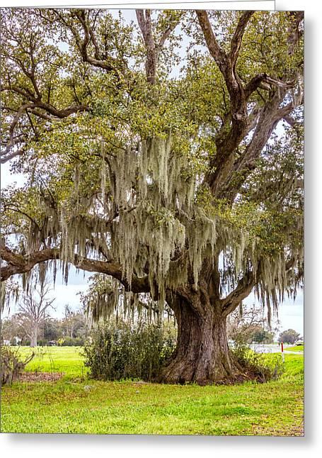 Evergreen Plantation Photographs Greeting Cards - Live Oak and Spanish Moss Greeting Card by Steve Harrington