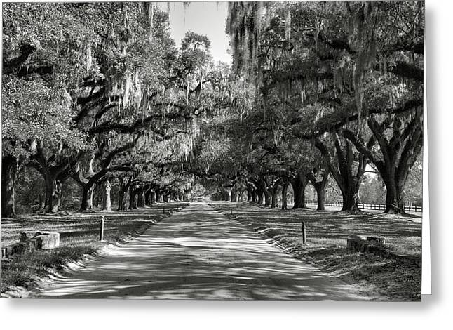Country Framed Prints Greeting Cards - Live Oak Avenue II Greeting Card by Steven Ainsworth