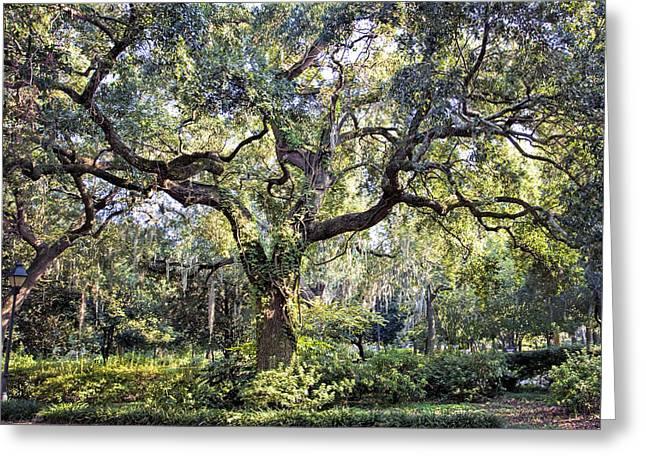 Juliette Low Greeting Cards - Live Oak Greeting Card by Diana Powell