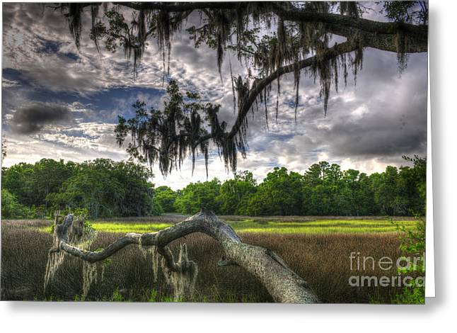 Mt. Pleasant Sc Greeting Cards - Live Oak Marsh View Greeting Card by Dale Powell