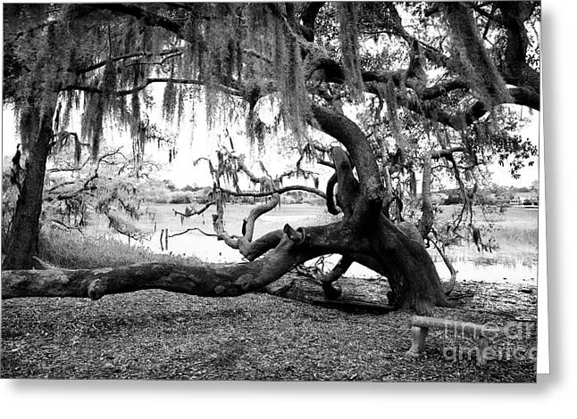 Live Art Photographs Greeting Cards - Live Oak Seat Greeting Card by John Rizzuto