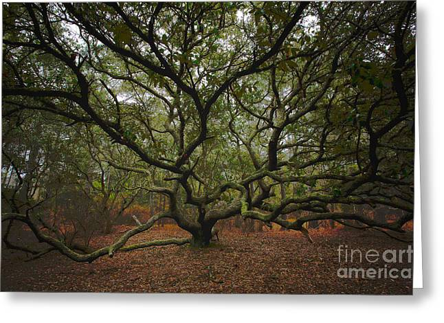 Paint Photograph Greeting Cards - Live Oak Tree - Corolla Outer Banks I Greeting Card by Dan Carmichael