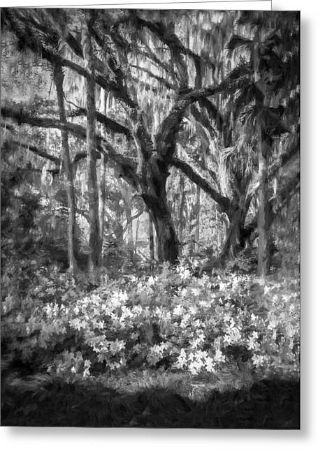 Saw Greeting Cards - Live Oaks and Azaleas Painted BW Greeting Card by Rich Franco