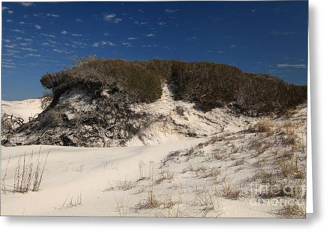 St Joseph Peninsula State Park Greeting Cards - Lively Dunes Greeting Card by Adam Jewell