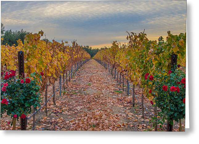 Livermore Vineyard Greeting Card by Marc Crumpler