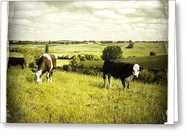 Bull Photographs Greeting Cards - Livestock  Greeting Card by Les Cunliffe