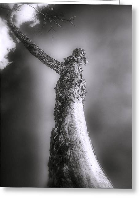Ent Greeting Cards - Living Dead Tree - Spooky - Eerie Greeting Card by Jason Politte