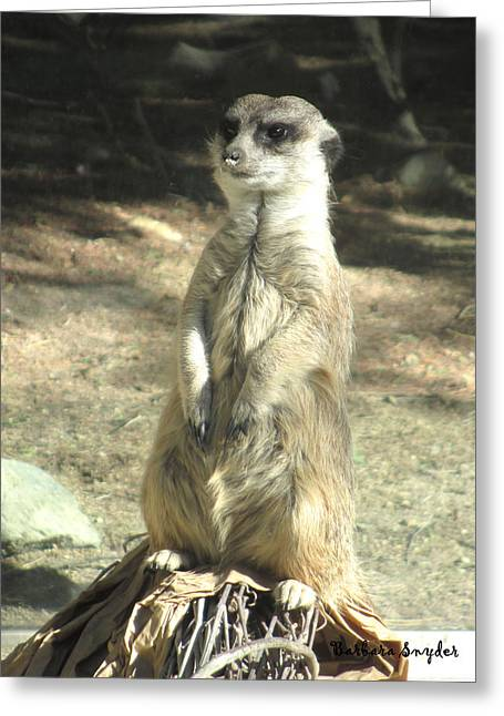 Living Desert Meerkat Greeting Card by Barbara Snyder