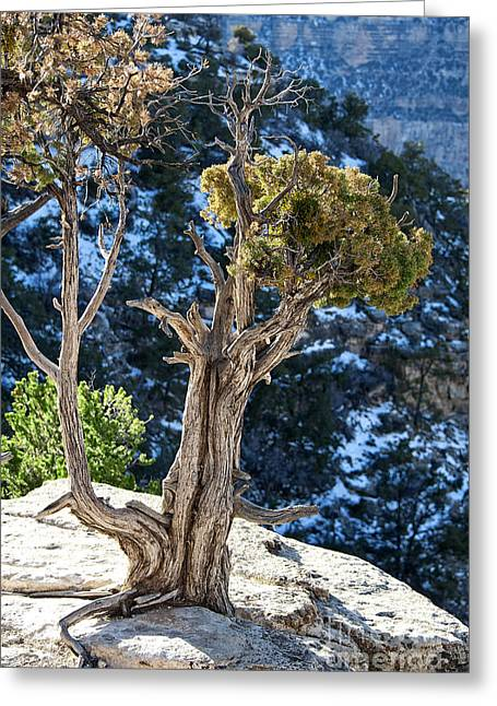 Fineartphotography Greeting Cards - Living on the Edge Greeting Card by Lee Craig
