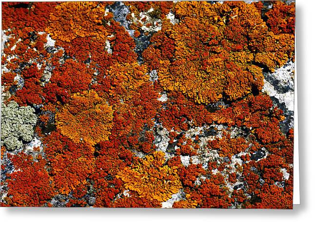 Recently Sold -  - Tangerine Greeting Cards - Living Rock  Greeting Card by The Forests Edge Photography - Diane Sandoval