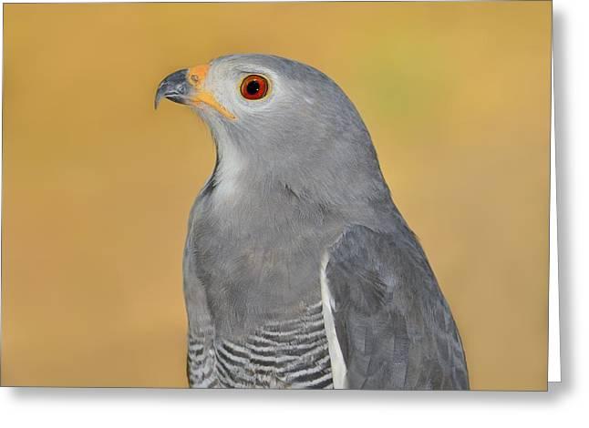 Kites Greeting Cards - Lizard Buzzard Greeting Card by Tony Beck