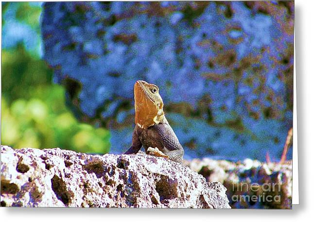 Gecko Print Greeting Cards - Lizard Greeting Card by Chuck  Hicks