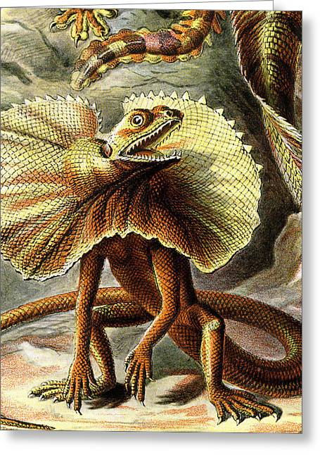 Lounge Digital Art Greeting Cards - Lizard Detail III Greeting Card by Unknown