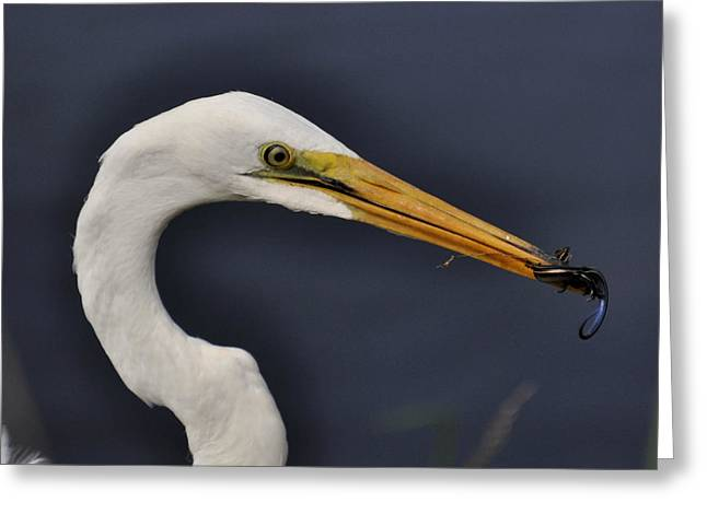 Lizard For Lunch - C3736b Greeting Card by Paul Lyndon Phillips